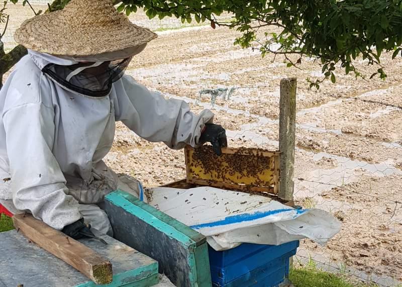 خرید عسل طبیعی درمانی