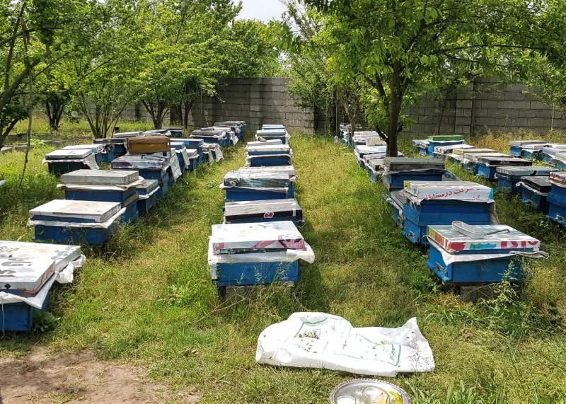 خرید مستقیم از زنبوردار