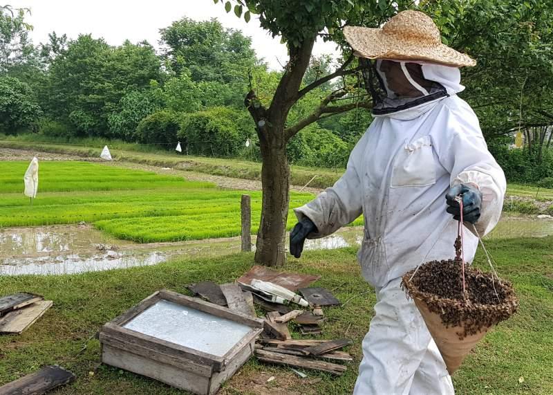زنبوردار خانم حامیان