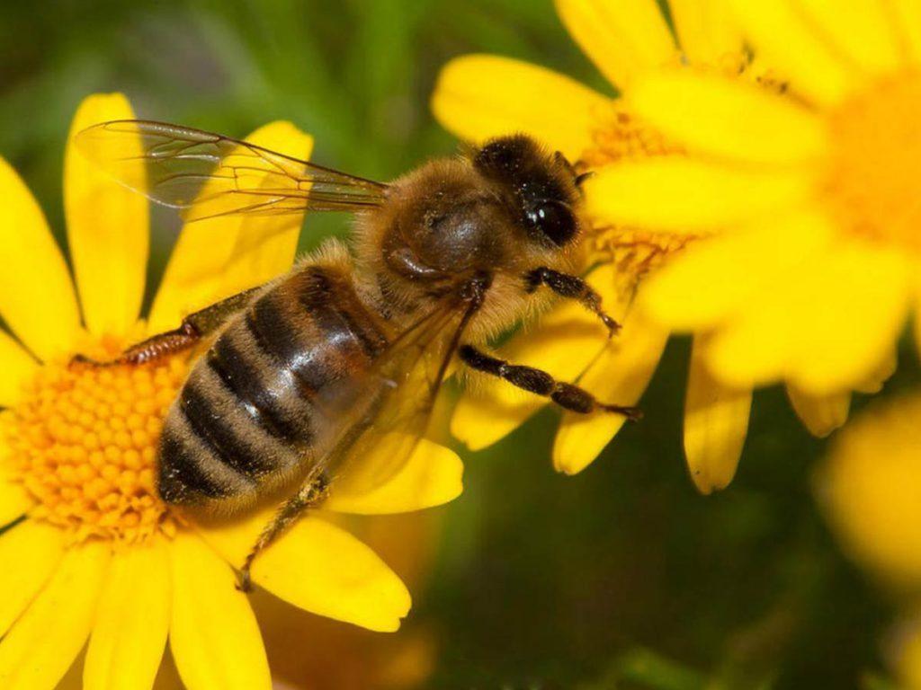 سرگیجه یکی از علائم خطرناک حساسیت به نیش زنبور است.