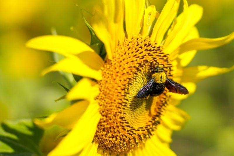 خرید عسل از زنبورداران