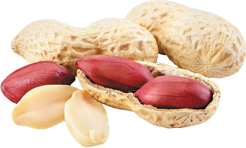 مصرف بادام زمینی کم خونی مادران باردار را جبران میکند.