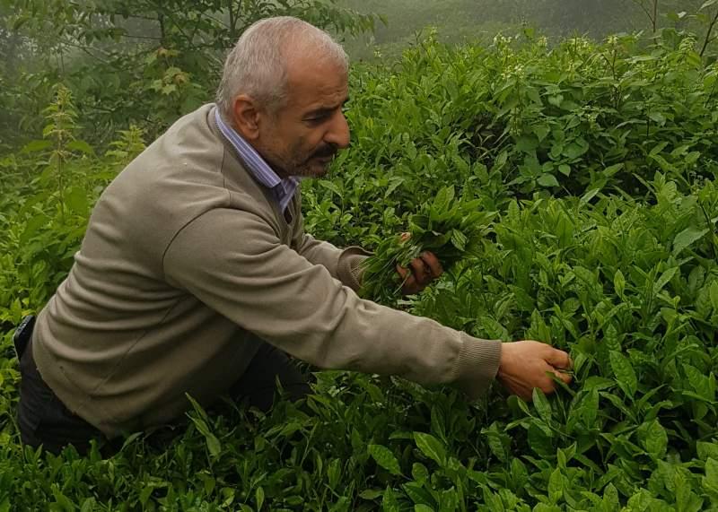چای سنتی آقای علیزاده