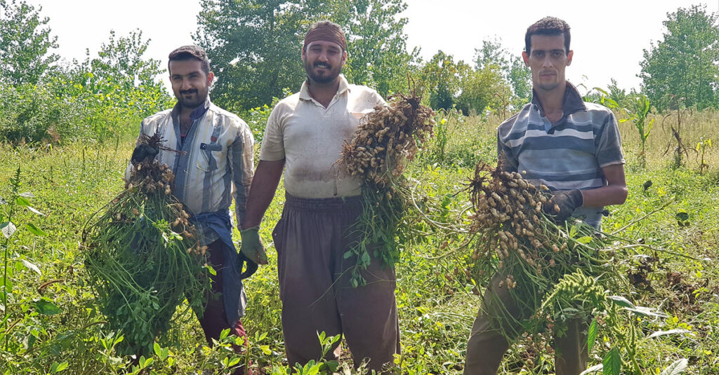 مستقیم از کشاورز بخریم