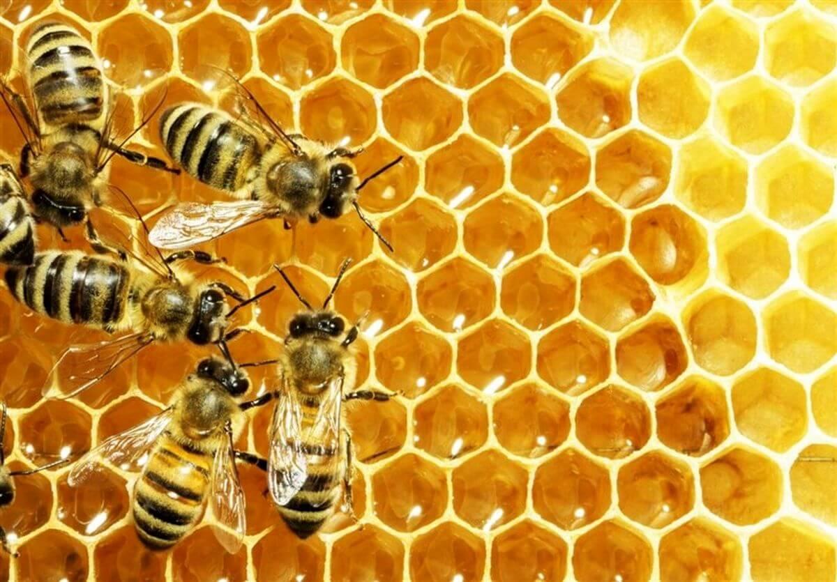 گرده گل مانند سایر فرآوردههای زنبور عسل، خاصیتها و فواید بیشماری دارد.