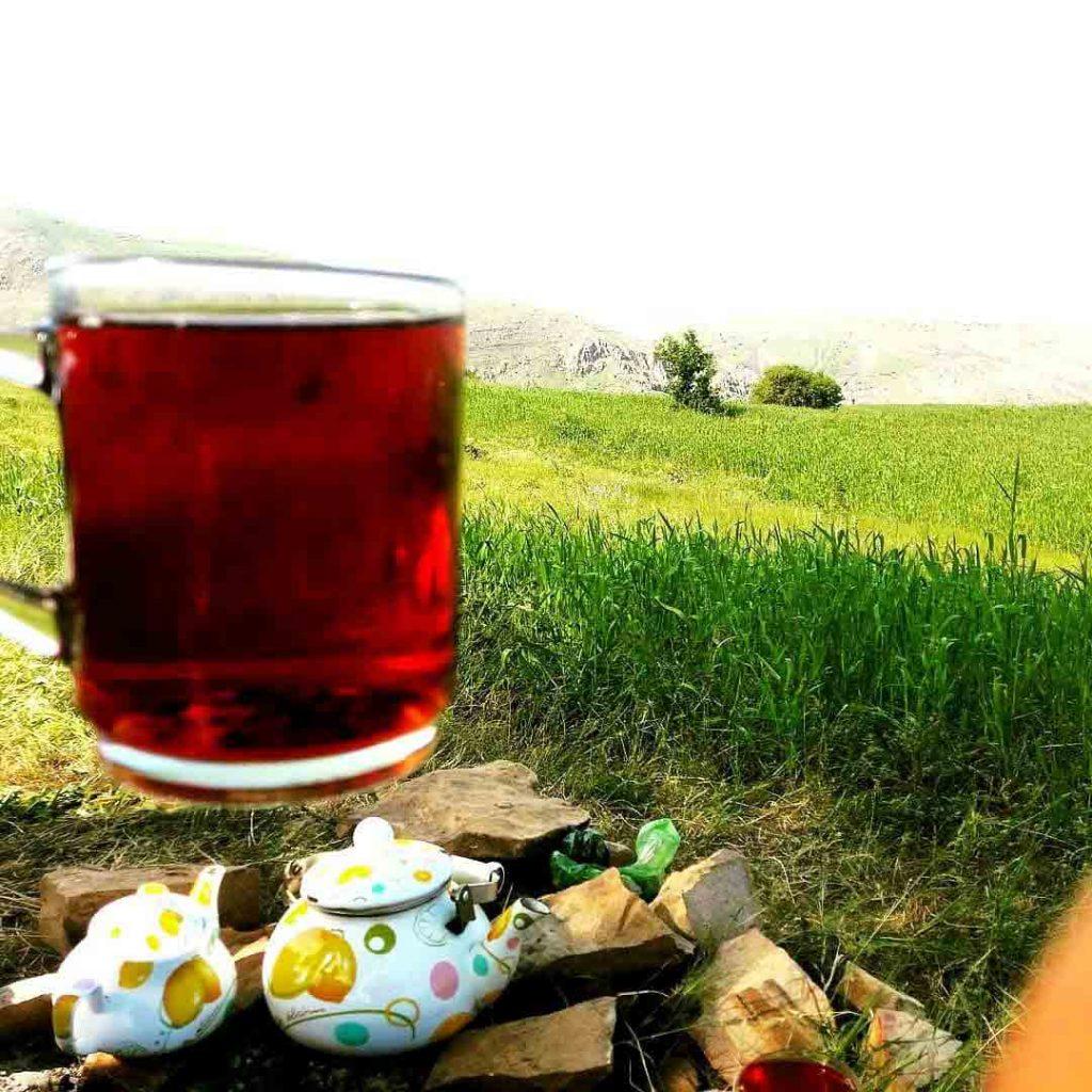 در هنگام خرید چای کله مورچه ای باید از اصالت محصول مطمئن شوید.