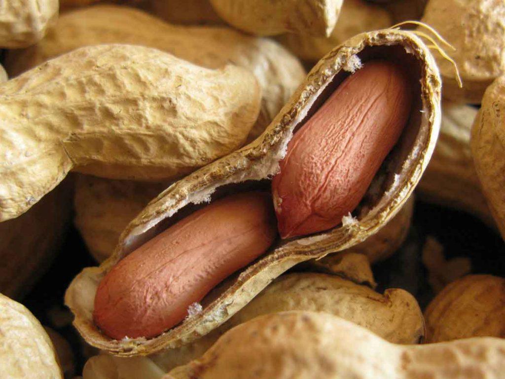 مصرف بادام زمینی برای کودکان، افراد مسن، ورزشکاران و همچنین افراد باردار سودمند است.
