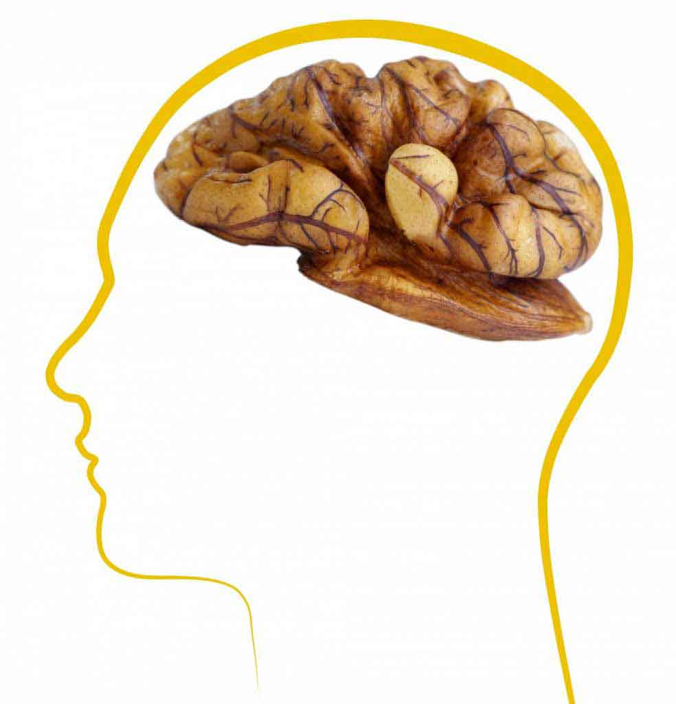 مصرف گردو توسط مادر به رشد مغز و تقویت حافظه جنین کمک میکند.