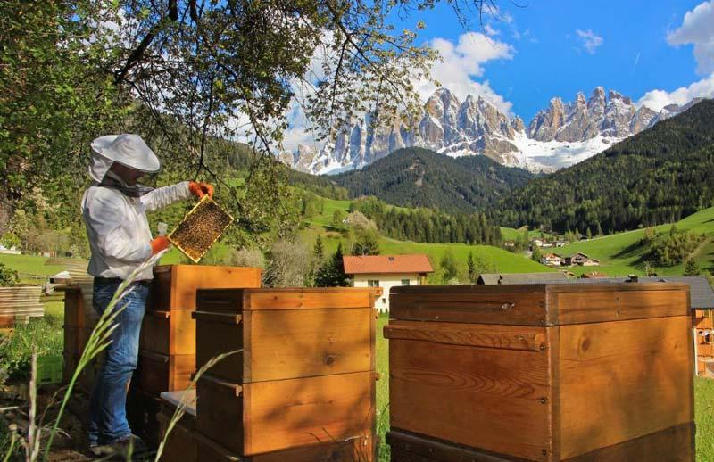خواص عسل کوهی بیشتر از سایر عسلهاست.