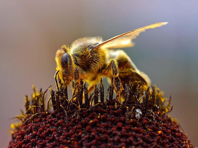 در مناطق جنگلی زنبورهای وحشی از شهد گلها و گیاهان وحشی تغذیه میکنند و عسلی تولید میشود که خواصی منحصربهفرد دارد.