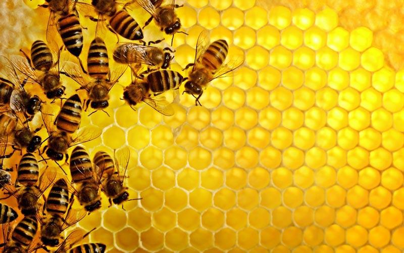 درمان عفونت لثه با عسل بدون عوارض جانبی امکان پذیر است.