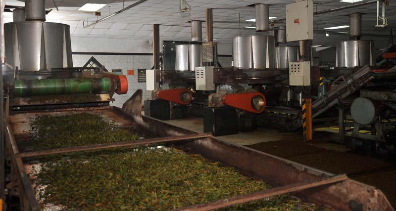 کیفیت چای به دلیل ترکیبات فنولیک و پلیفنولها آن است.