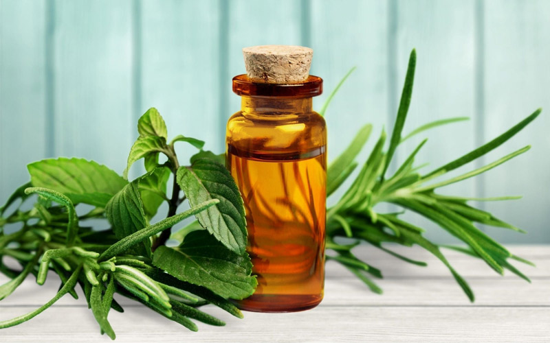 روغن درخت چای برای درمان سرماخوردگی مفید است.