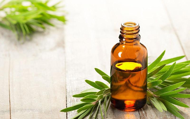 روغن درخت چای برای درمان نیش حشرات مفید است.