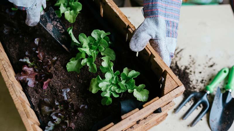 پژوهشهای باغبانی و تجربیات ارزشمند باغبانهای مختلف نشان داده که اگه تفاله را در اطراف ریشه گیاهان قرار دهند، رشد گیاه پرقدرت تر انجام میشود.